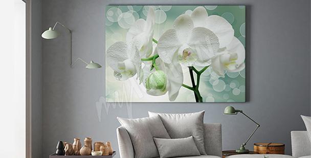 Obraz kwiaty storczyków 3D