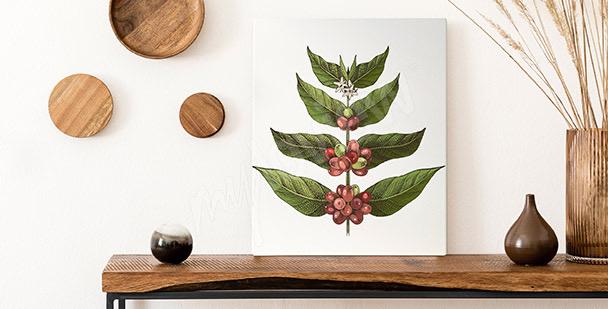 Obraz liście kawowca