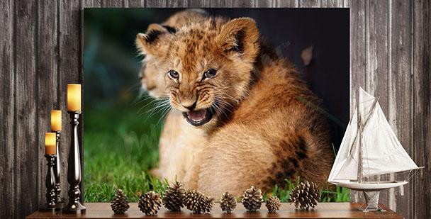 Obraz lwiątko