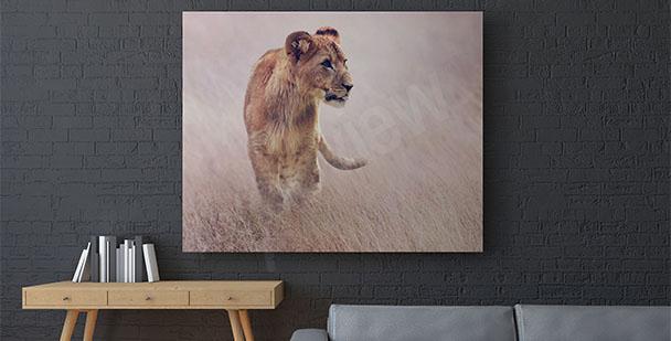 Obraz lwica w trawie