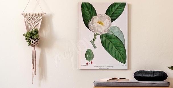 Obraz magnolia retro