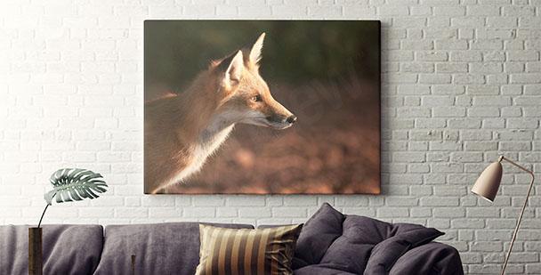 Obraz na płótnie lis