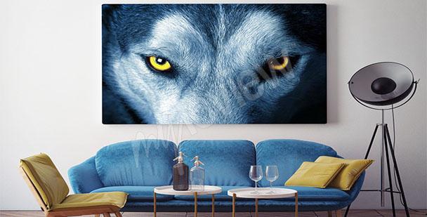 Obraz oczy wilka