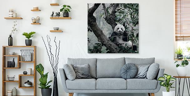 Obraz panda wśród zarośli