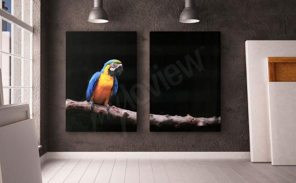 Obraz papuga dyptyk