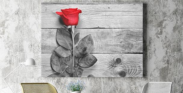 Obraz róża na deskach