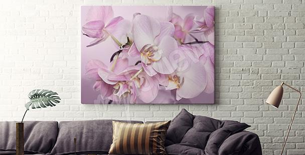 Obraz różowe storczyki