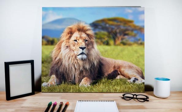 Obraz samiec lwa na tle krajobrazu