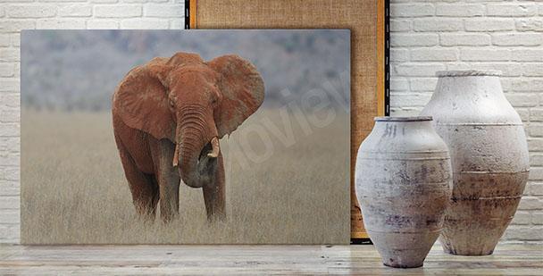 Obraz słoń w parku narodowym