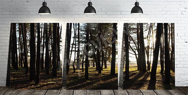 Obraz tryptyk z drzewami