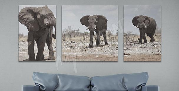 Obraz trzy słonie do salonu
