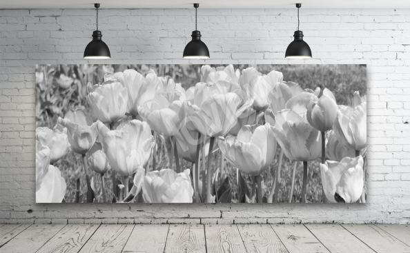 Obraz tulipany czarno-białe