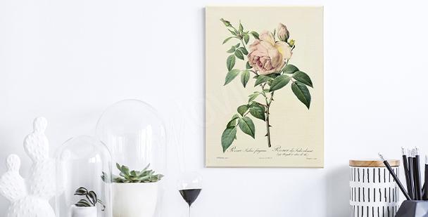 Obraz róże na białym tle