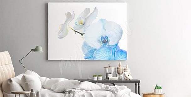 Obraz z kwiatami - storczyki