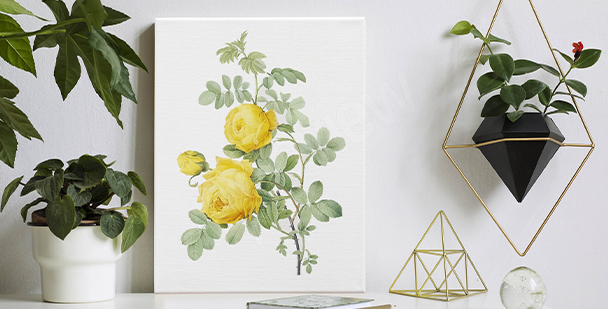 Obraz białe róże