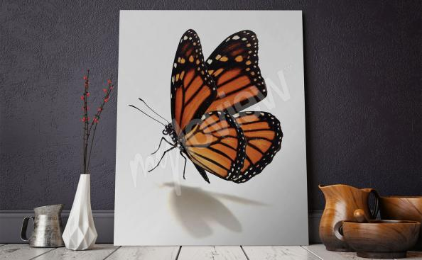 Obraz z motylem