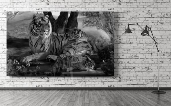 Obraz z tygrysami w czerni i bieli