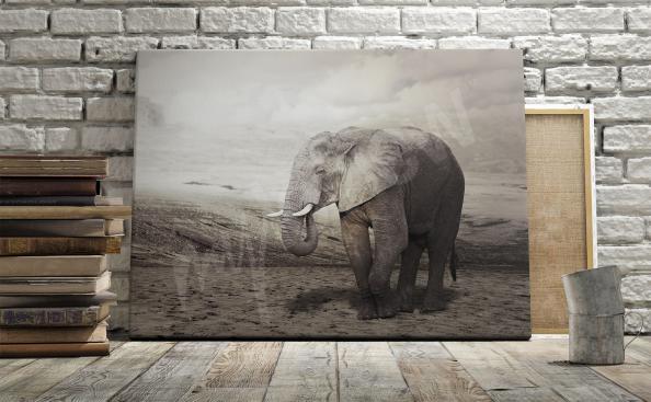 Obraz ze słoniem afrykańskim do salonu