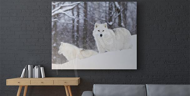 Obraz zwierzęta Arktyki