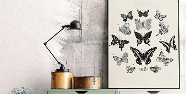 Plakat atlas motyli