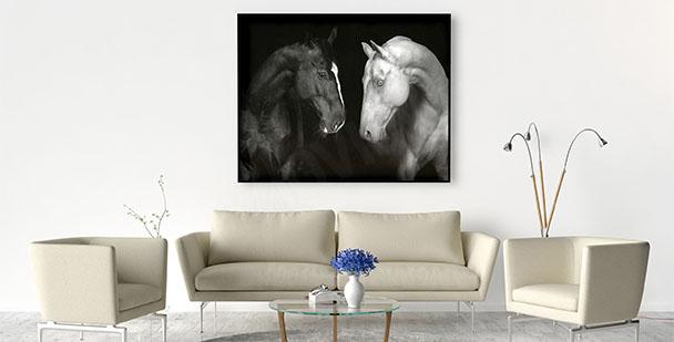 Plakat czarny i biały koń