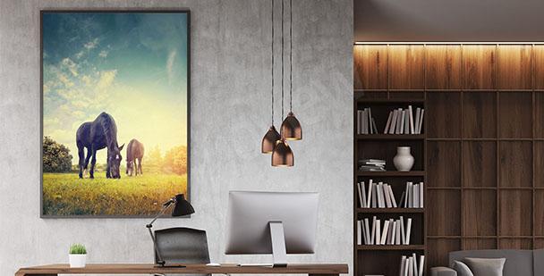 Plakat dwa konie na łące