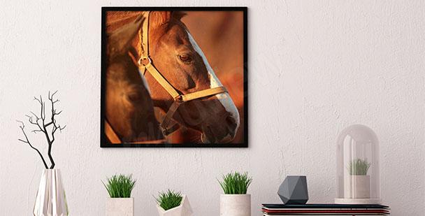 Plakat głowa konia