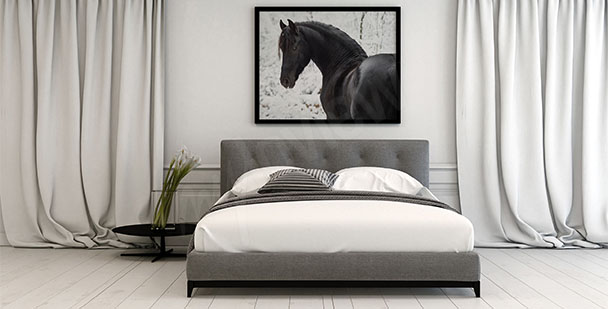 Plakat koń fryzyjski