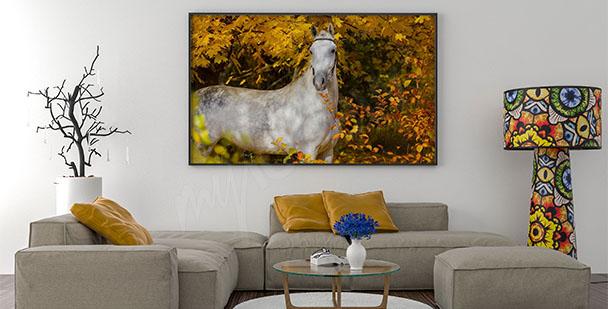 Plakat koń i jesienne liście