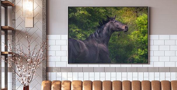 Plakat koń na tle zieleni