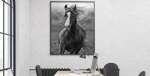 Plakat koń w galopie