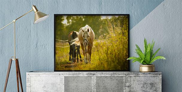Plakat konie w parku