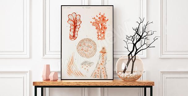 Plakat koralowce do przedpokoju