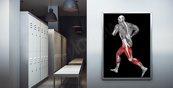 Plakat mięśnie człowieka