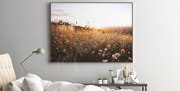 Plakat pole o zachodzie słońca