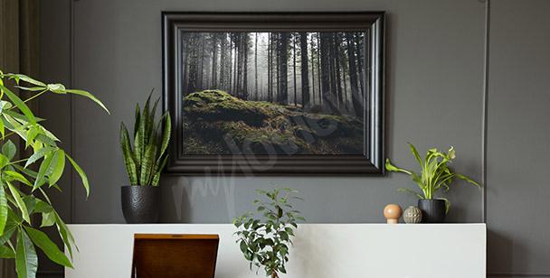 Plakat tajemniczy las