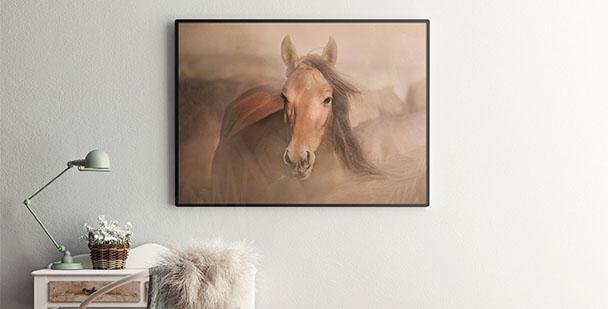 Plakat z gniadym koniem